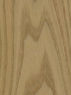 American Red Elm Timber In The Uk Timbersource Online